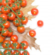 Cherry tomatoes and autumn leaves closeup on white background. h — Stock Photo
