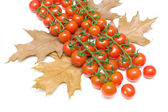 Ripe cherry tomatoes and autumn leaves on white background — Foto de Stock