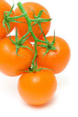 Orange tomatoes in water drops on a white background close-up — Stock Photo