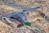 Trophy hunter: wild geese and wild duck — Zdjęcie stockowe