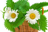 chamomile flowers and nettle leaves in a basket. — Stock Photo