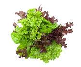 Lettuce isolated on white background — Stock Photo