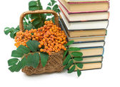 Basket with rowan berries and books closeup. white background. — Stock Photo