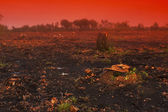 Deforested Land — Stockfoto