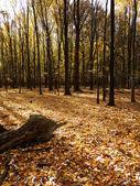 Falla skogsmark scen — Stockfoto