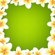 White Frangipani Frame With Green Background — Stock Vector
