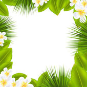 Frame With Frangipani And Leaf — Stock Vector