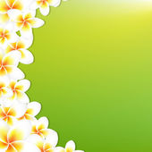 White Frangipani Border With Green Background — Stock Vector