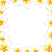 White Frangipani Frame — Stock Vector