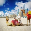 Stock Photo: Camel on Dubai Beach