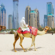 Dubai Camel on the town scape backround — Stock Photo