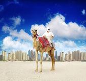 Camel on Dubai Marina Beach — Stock Photo