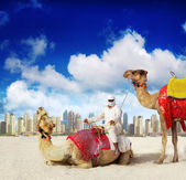 Dubai Marina beach and Camel — Stock Photo