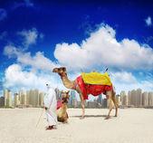 Camel on Dubai Beach, United Arab Emirates — Stock Photo
