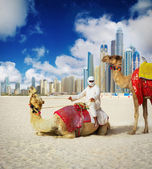 Camel on Dubai Beach — Stock Photo