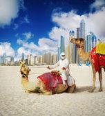 Camel on Dubai Beach — Stock Photo