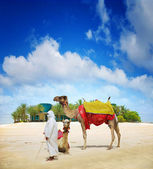 Camel on Dubai Island Beach — Stock Photo