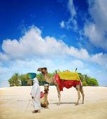 Camel on Dubai Island Beach — Stock Photo