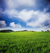 Green Field Background, Lithuania — Stock Photo