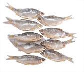 Torkad fisk på ett bord — Stockfoto