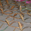 Stock Photo: Wooden snake
