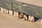 Old marine wood in the beach in normandy — Stock Photo