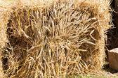 Eski gelenek hasat buğday demeti — Stok fotoğraf
