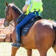 Stock Photo: French mounted gendarme