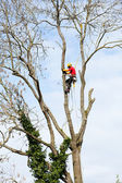An arborist cutting a tree with a chainsaw  — Stock Photo