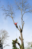 An arborist cutting a tree with a chainsaw  — Stockfoto