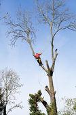 Un arbolista cortar un árbol con una motosierra — Foto de Stock