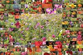 Collage of flowers — Stock Photo