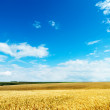 Gold ears of wheat under cloudy sky — Stock Photo