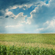 Stock Photo: Dramatic sky over maize field