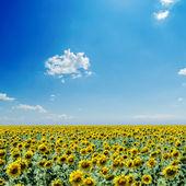 Sonnenblumen feld und weiße wolken am blauen himmel — Stockfoto