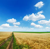 Rural road in golden agricultural field under cloudy sky — Stock Photo