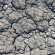 Dry cracked earth as texture — Stock Photo