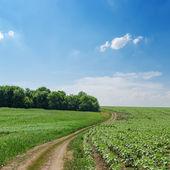 Rural road in green fields and cloudy sky — Foto de Stock