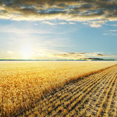 Sunset over wheat field — 图库照片