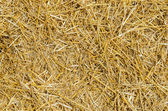 Straw as textured background — Stock Photo