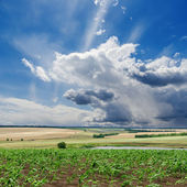 Cloudy sky and green field — Stock Photo