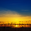 Good sunset over river with cane — Stock Photo #13719612