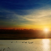 Sunset over river with swans — Stock Photo