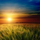 Espectacular puesta de sol sobre campo verde — Foto de Stock