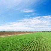 Groene en zwarte veld onder bewolkte hemel — Stockfoto