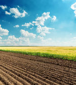 Black and green fields under cloudy sky — Stock Photo