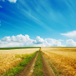 Road in golden fields — Stock Photo