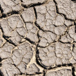 Dry cracked earth as textured background — Stock Photo