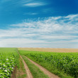 Dirty road in green fields under blue sky — Stock Photo