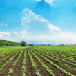 Blue sky over spring field — Stock Photo #14864043